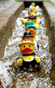 ducks-in-a-row-pexel-106144-1